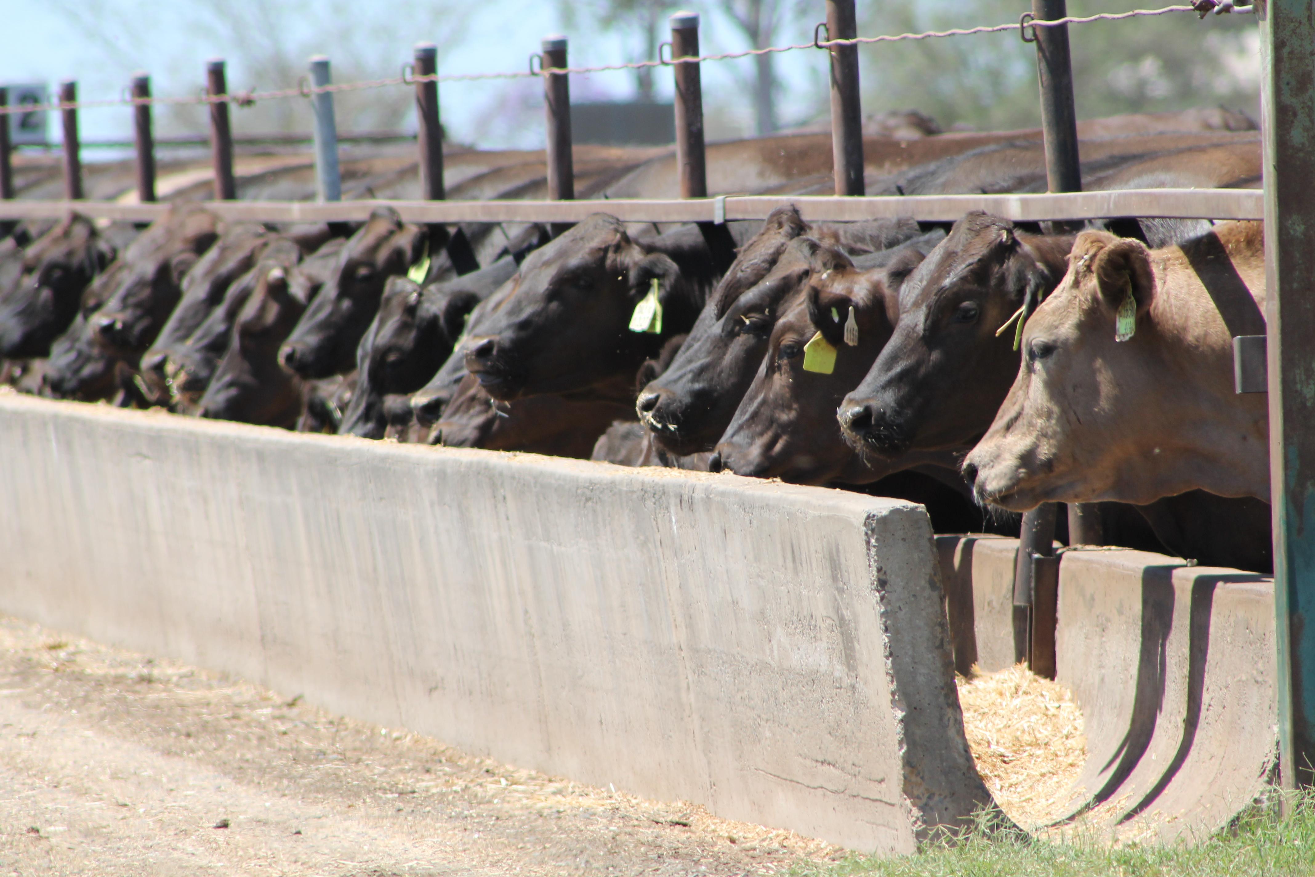 australian ruminant feed ban national uniform guidelines